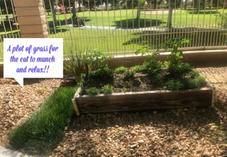 Garden-Box-planted-in-the-desert-with-tomatoes-and-flowers-Las-Vegas-Nv-2020.