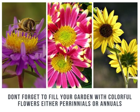 Dont-forget-to-fill-your-garden-with-colorful-flowers