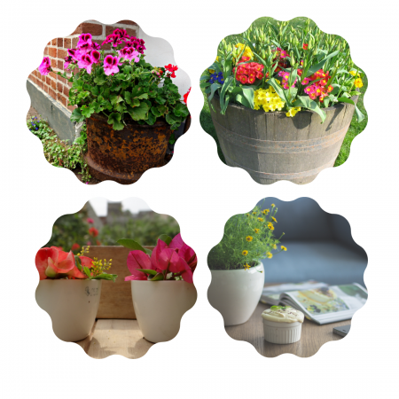 Chosing-the-right-container-for-new-plants