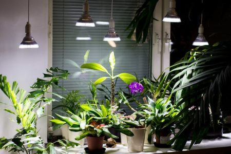 Mimic-the-suns-rays-with-plant-lights.