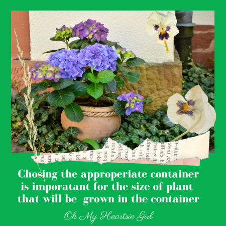 The-right-size-container-for-the-type-of-plant-will-result-in-the-succcess-of-plant-growth