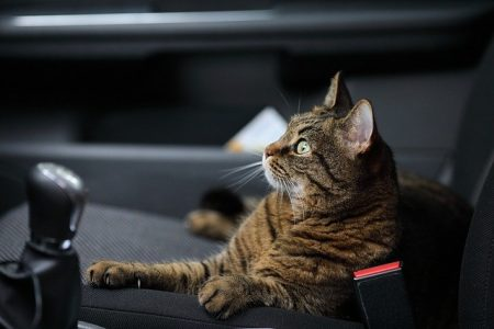 How-to-Travel-With-a-Cat-In-a-Car.