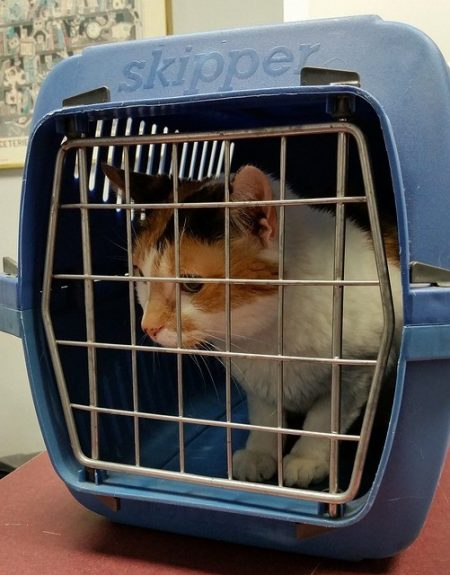 With-proper-identification-medication-stopovers-and-safety-measures-you-can-have-a-safe-and-successful-road-trip-with-your-cat