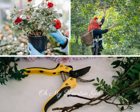 Top-5-Best-Pruning-Tips-to-Transform-Your-Garden-Into-an-Exquisite-Place