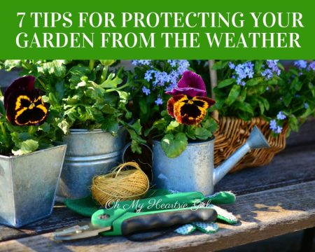 7-Tips-For-Protecting-Your-Garden-From-The-Weather