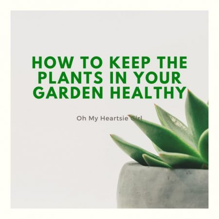 Keep-the-plants-in-your-garden-healthy-by-composting-and-keep-an-eye-out-for-bugs.-You-might-need-a-professional