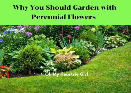 Why-you-should-plant-perrenial-flowers
