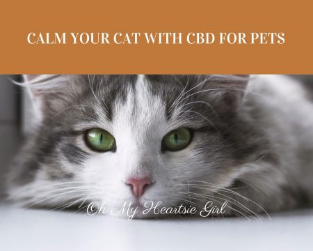 Calm-Your-Cat-with-CBD-for-Pets