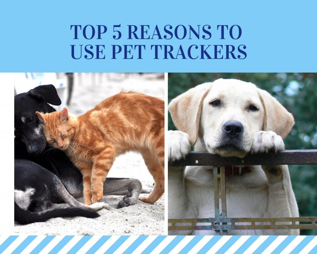 Top-5-Reasons-to-use-Pet-Trackers