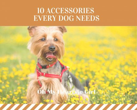 10-Accessories-Every-Dog-Needs