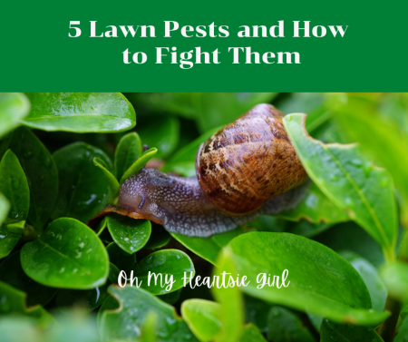 5-Lawn-Pests-and-How-to-Fight-Them