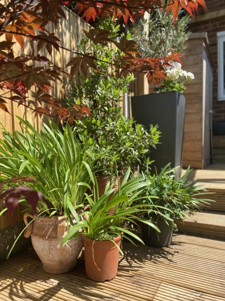 How-to-turn-a-small-garden-into-an-Oasis