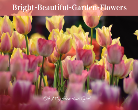 Bright-Beautiful-Flowers-For-Spring-Gardens