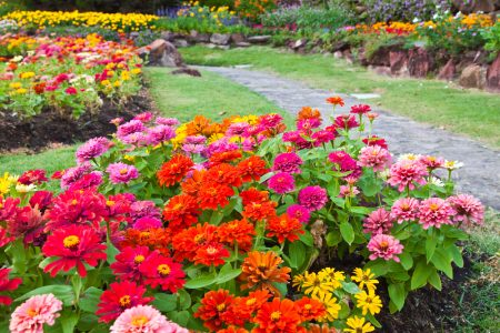 Bright-Beautiful-Garden-Flowers