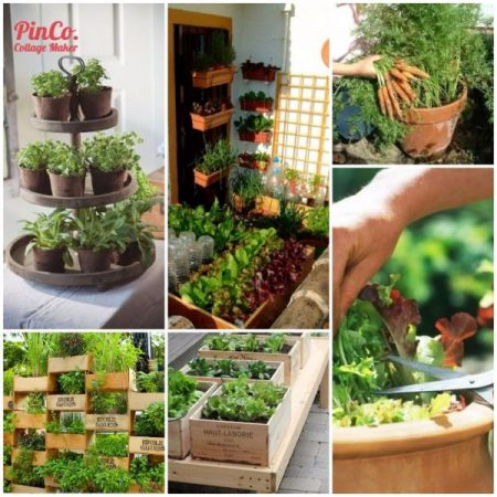Growing-plants-vegetables-in-containers-when-no-other-area-available.