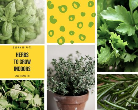 Herbs-that-will-grow-indoors-basil-rosemary-thyme-parsley-oregano
