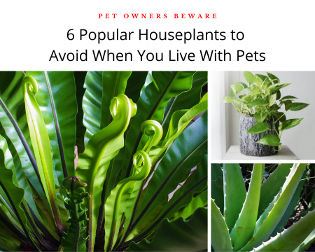 Plants-that-are-unsafe-for-dogs-and-cats-in-your-home